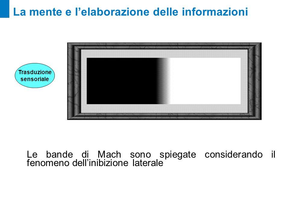 La mente e lelaborazione delle informazioni Le bande di Mach sono spiegate considerando il fenomeno dellinibizione laterale Trasduzione sensoriale