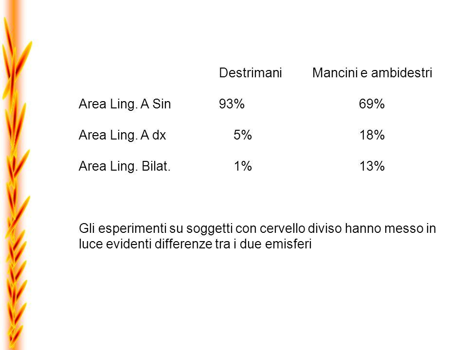 DestrimaniMancini e ambidestri Area Ling. A Sin 93%69% Area Ling. A dx 5%18% Area Ling. Bilat. 1%13% Gli esperimenti su soggetti con cervello diviso h