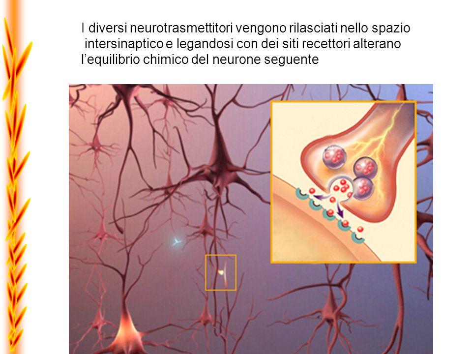 I diversi neurotrasmettitori vengono rilasciati nello spazio intersinaptico e legandosi con dei siti recettori alterano lequilibrio chimico del neuron
