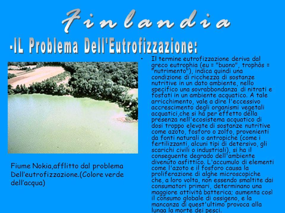 Il termine eutrofizzazione deriva dal greco eutrophia (eu = buono , trophòs = nutrimento ), indica quindi una condizione di ricchezza di sostanze nutritive in un dato ambiente, nello specifico una sovrabbondanza di nitrati e fosfati in un ambiente acquatico.