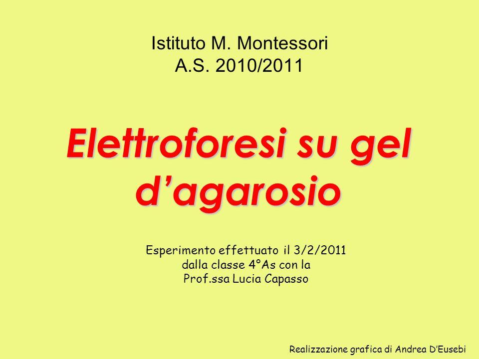 Elettroforesi su gel dagarosio Istituto M. Montessori A.S. 2010/2011 Esperimento effettuato il 3/2/2011 dalla classe 4°As con la Prof.ssa Lucia Capass
