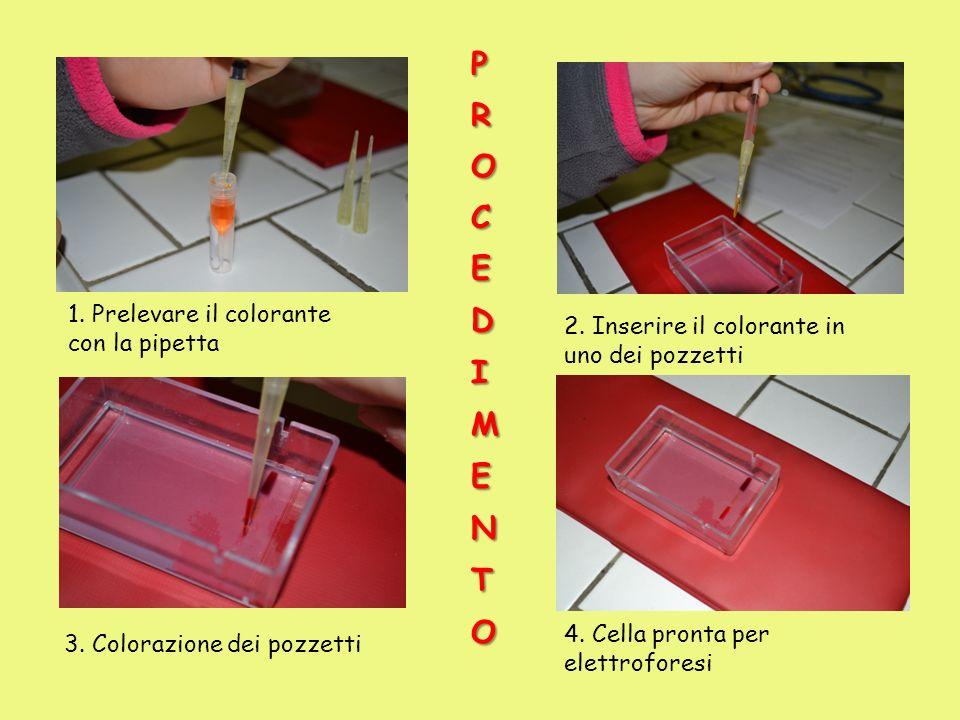 1. Prelevare il colorante con la pipetta 2. Inserire il colorante in uno dei pozzetti 3. Colorazione dei pozzetti 4. Cella pronta per elettroforesi