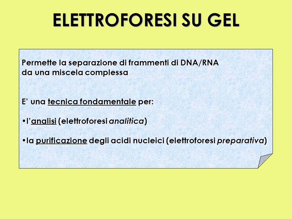 ELETTROFORESI SU GEL Permette la separazione di frammenti di DNA/RNA da una miscela complessa E una tecnica fondamentale per: lanalisi (elettroforesi