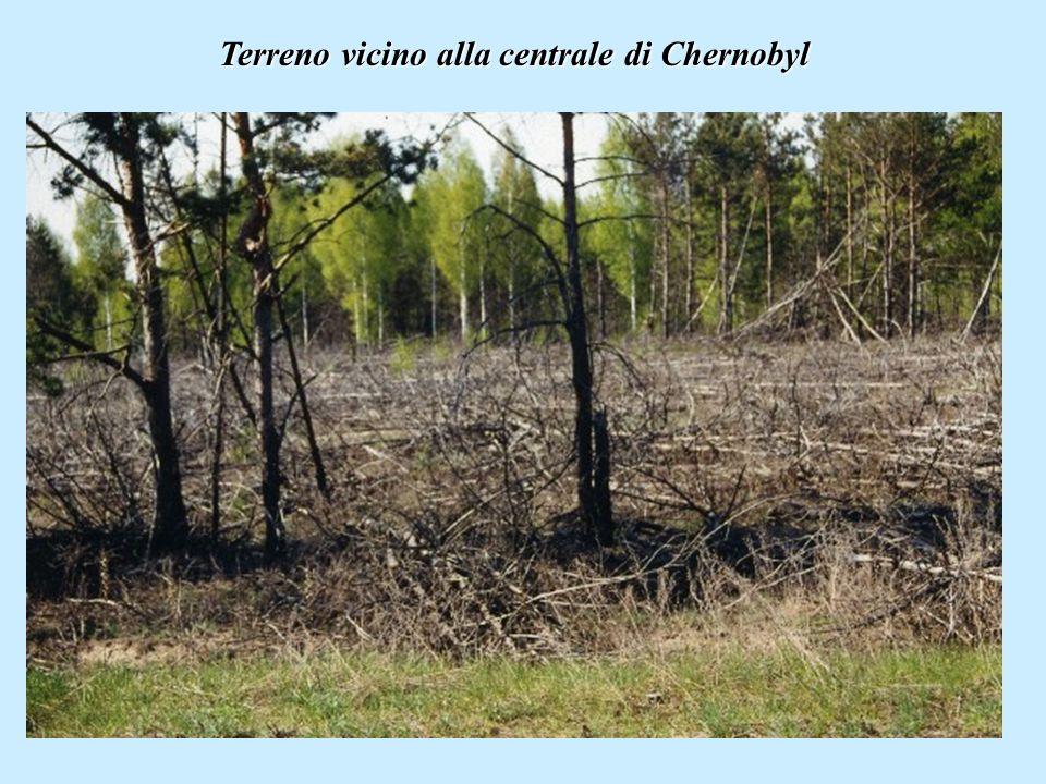 Terreno vicino alla centrale di Chernobyl