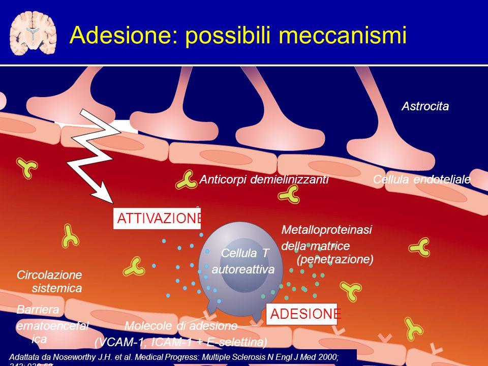 Adesione: possibili meccanismi Cellula endoteliale Circolazione sistemica Molecole di adesione (VCAM-1, ICAM-1 + E-selettina) Anticorpi demielinizzanti Astrocita Metalloproteinasi della matrice (penetrazione) ATTIVAZIONE ADESIONE Adattata da Noseworthy J.H.