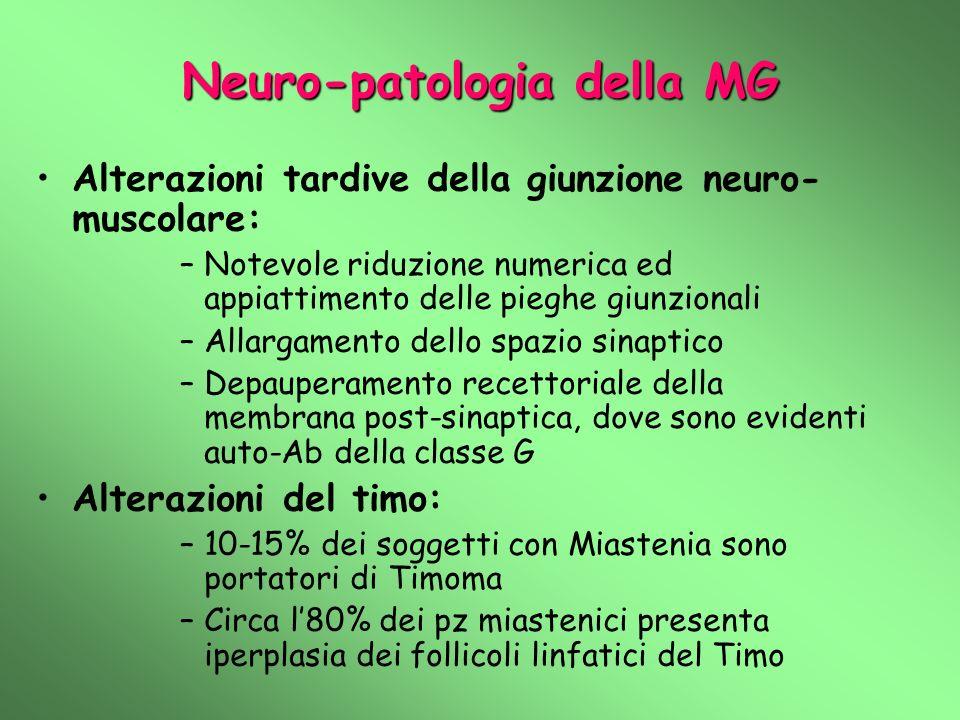 Neuro-patologia della MG Alterazioni tardive della giunzione neuro- muscolare: –Notevole riduzione numerica ed appiattimento delle pieghe giunzionali –Allargamento dello spazio sinaptico –Depauperamento recettoriale della membrana post-sinaptica, dove sono evidenti auto-Ab della classe G Alterazioni del timo: –10-15% dei soggetti con Miastenia sono portatori di Timoma –Circa l80% dei pz miastenici presenta iperplasia dei follicoli linfatici del Timo