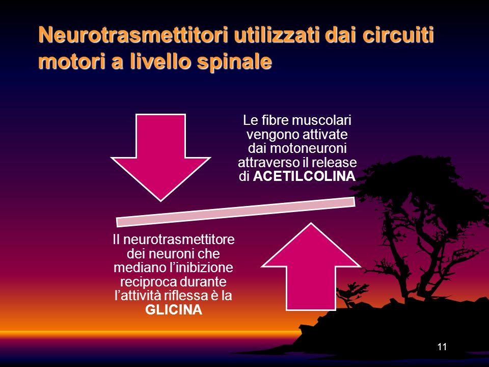 11 Neurotrasmettitori utilizzati dai circuiti motori a livello spinale Le fibre muscolari vengono attivate dai motoneuroni attraverso il release di AC