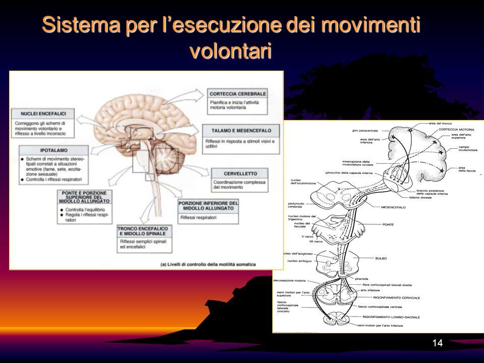 14 Sistema per lesecuzione dei movimenti volontari