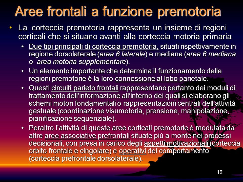 19 Aree frontali a funzione premotoria La corteccia premotoria rappresenta un insieme di regioni corticali che si situano avanti alla corteccia motori