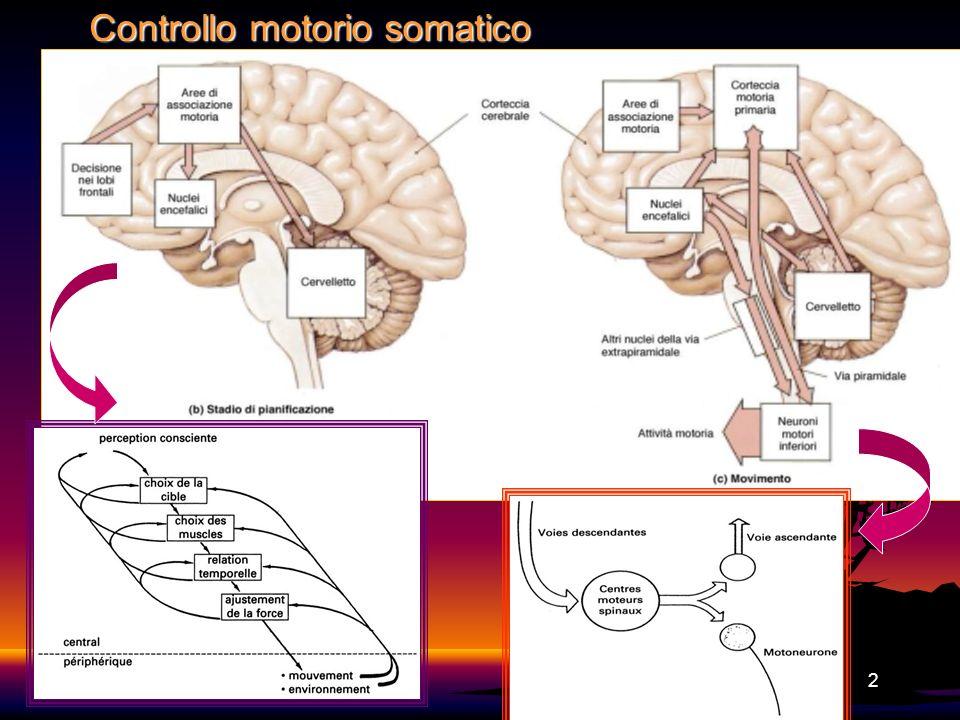 2 Controllo motorio somatico