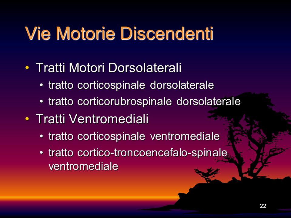 22 Vie Motorie Discendenti Tratti Motori DorsolateraliTratti Motori Dorsolaterali tratto corticospinale dorsolateraletratto corticospinale dorsolatera