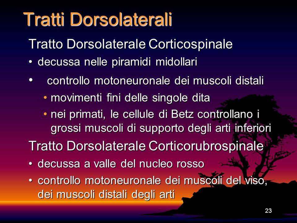 23 Tratti Dorsolaterali Tratto Dorsolaterale Corticospinale decussa nelle piramidi midollaridecussa nelle piramidi midollari controllo motoneuronale d