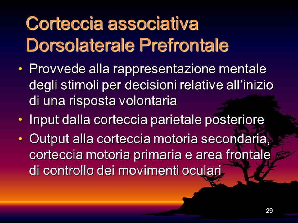 29 Corteccia associativa Dorsolaterale Prefrontale Provvede alla rappresentazione mentale degli stimoli per decisioni relative allinizio di una rispos