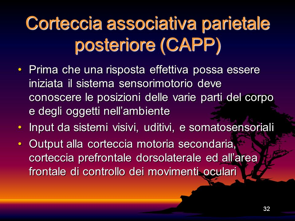 32 Corteccia associativa parietale posteriore (CAPP) Prima che una risposta effettiva possa essere iniziata il sistema sensorimotorio deve conoscere l