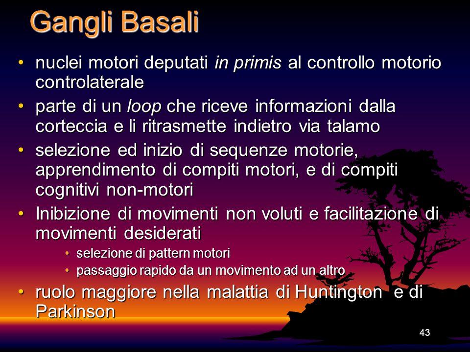 43 Gangli Basali nuclei motori deputati in primis al controllo motorio controlateralenuclei motori deputati in primis al controllo motorio controlater