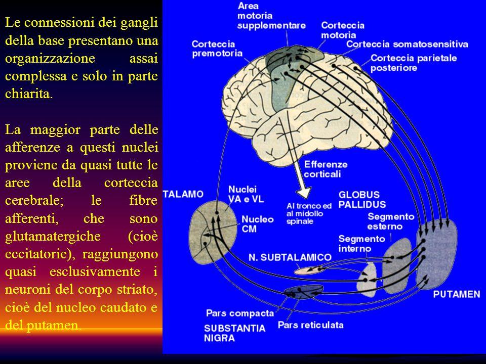 44 Le connessioni dei gangli della base presentano una organizzazione assai complessa e solo in parte chiarita. La maggior parte delle afferenze a que