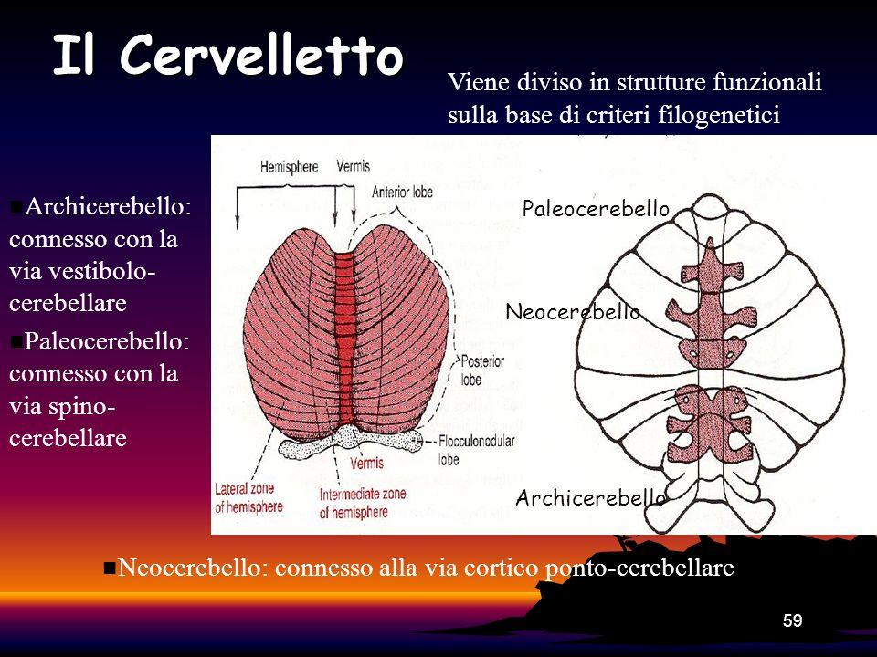 59 Neocerebello Paleocerebello Archicerebello Il Cervelletto n Archicerebello: connesso con la via vestibolo- cerebellare n Paleocerebello: connesso c