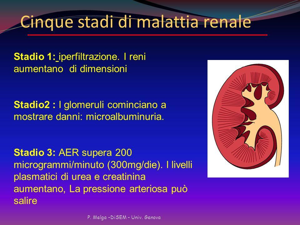 Cause principali di nuovi casi di ESRD negli USA (1997) P. Melga -DiSEM - Univ. Genova USRDS 1999 Renal Data Report NEFROPATIA DIABETICA (prevalenza)