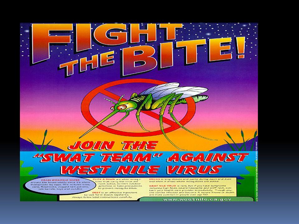 PREVENZIONE Non esiste un vaccino per la West Nile Disease La prevenzione consiste soprattutto nel ridurre lesposizione alle punture di zanzara.