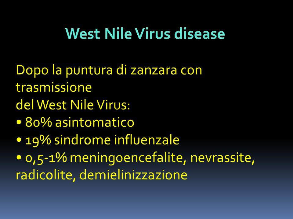 West Nile Virus disease Dopo la puntura di zanzara con trasmissione del West Nile Virus: 80% asintomatico 19% sindrome influenzale 0,5-1% meningoencef