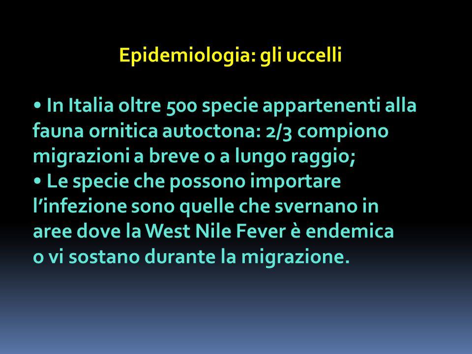 Epidemiologia: gli uccelli In Italia oltre 500 specie appartenenti alla fauna ornitica autoctona: 2/3 compiono migrazioni a breve o a lungo raggio; Le