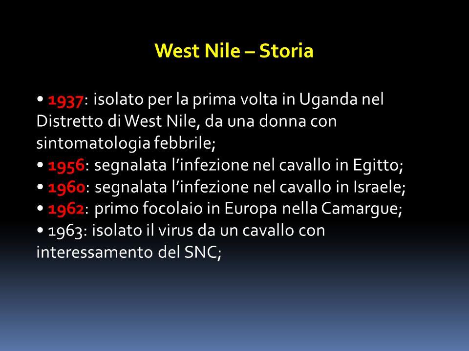 West Nile – Storia 1937: isolato per la prima volta in Uganda nel Distretto di West Nile, da una donna con sintomatologia febbrile; 1956: segnalata li