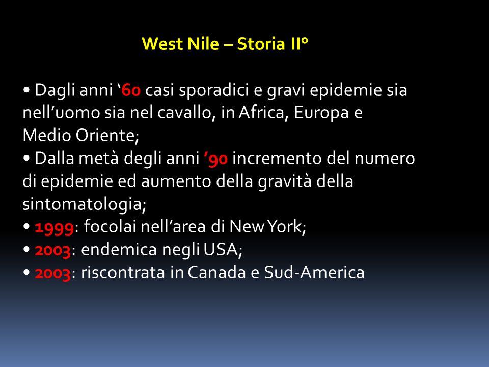 West Nile – Storia II° Dagli anni 60 casi sporadici e gravi epidemie sia nelluomo sia nel cavallo, in Africa, Europa e Medio Oriente; Dalla metà degli