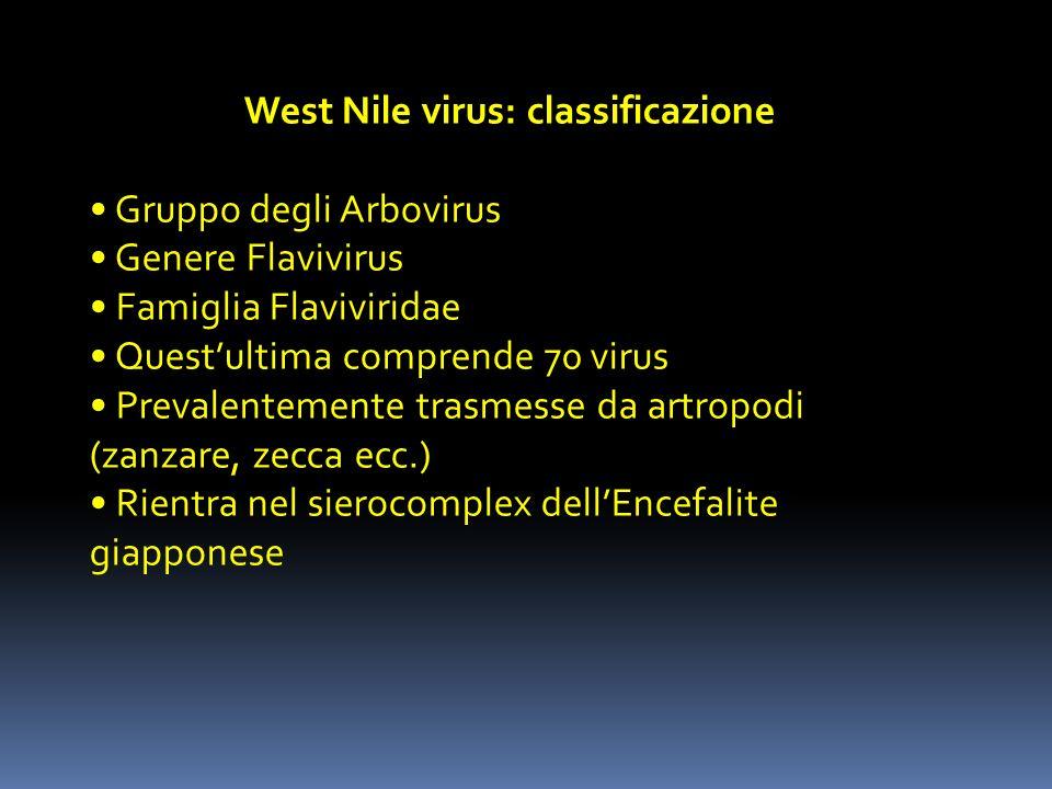 West Nile virus: classificazione Gruppo degli Arbovirus Genere Flavivirus Famiglia Flaviviridae Questultima comprende 70 virus Prevalentemente trasmes
