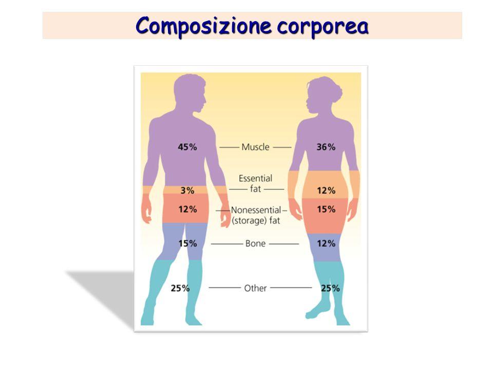 Composizione corporea Esistono diversi metodi per esplorare la sua composizione, a seconda appunto del grado di dettaglio che si vuole ottenere…