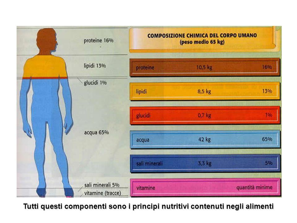 Tutti questi componenti sono i principi nutritivi contenuti negli alimenti