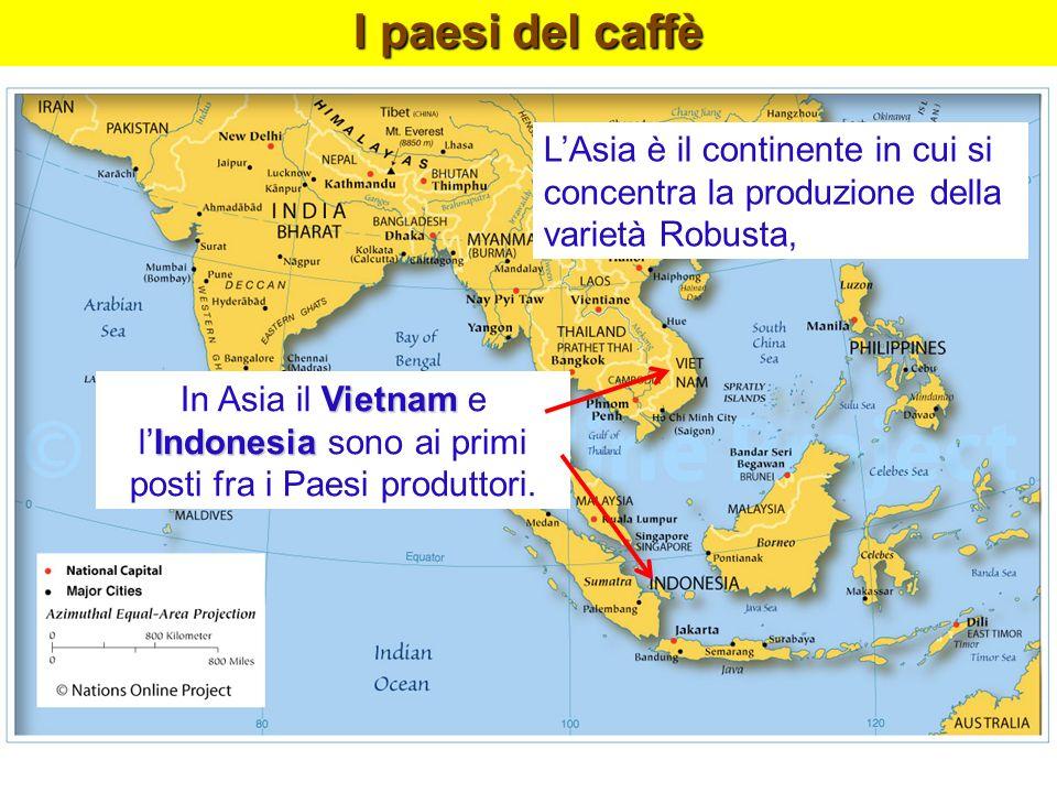 LAsia è il continente in cui si concentra la produzione della varietà Robusta, Vietnam In Asia il Vietnam e Indonesia lIndonesia sono ai primi posti f