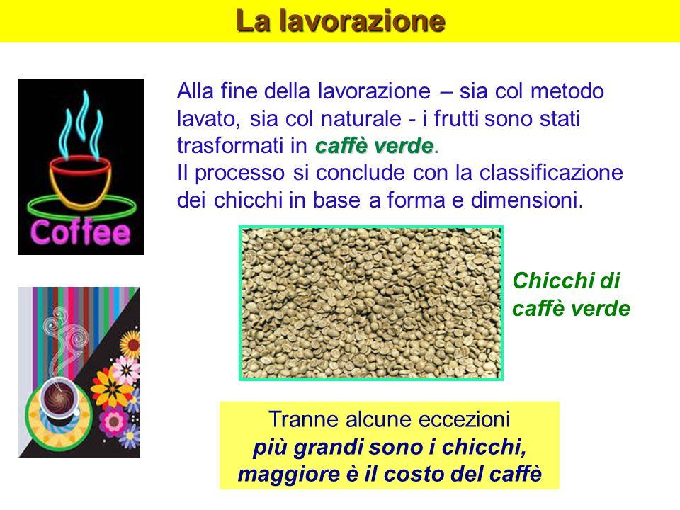 La lavorazione caffè verde Alla fine della lavorazione – sia col metodo lavato, sia col naturale - i frutti sono stati trasformati in caffè verde. Il