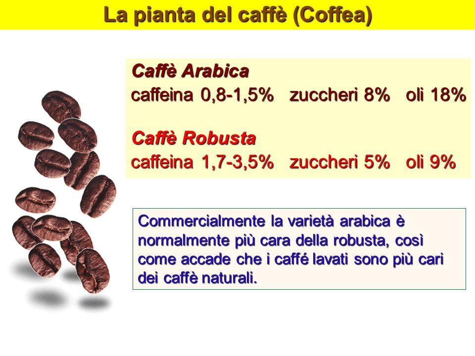 La pianta del caffè (Coffea) Caffè Arabica caffeina 0,8-1,5% zuccheri 8% oli 18% Caffè Robusta caffeina 1,7-3,5% zuccheri 5% oli 9% Commercialmente la