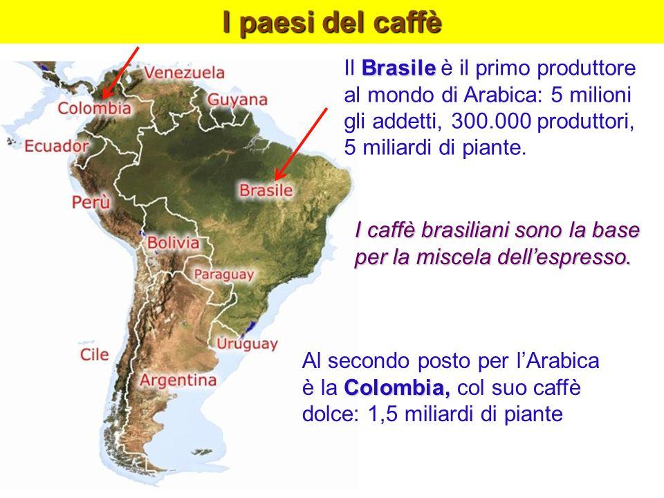I paesi del caffè Brasile Il Brasile è il primo produttore al mondo di Arabica: 5 milioni gli addetti, 300.000 produttori, 5 miliardi di piante. I caf