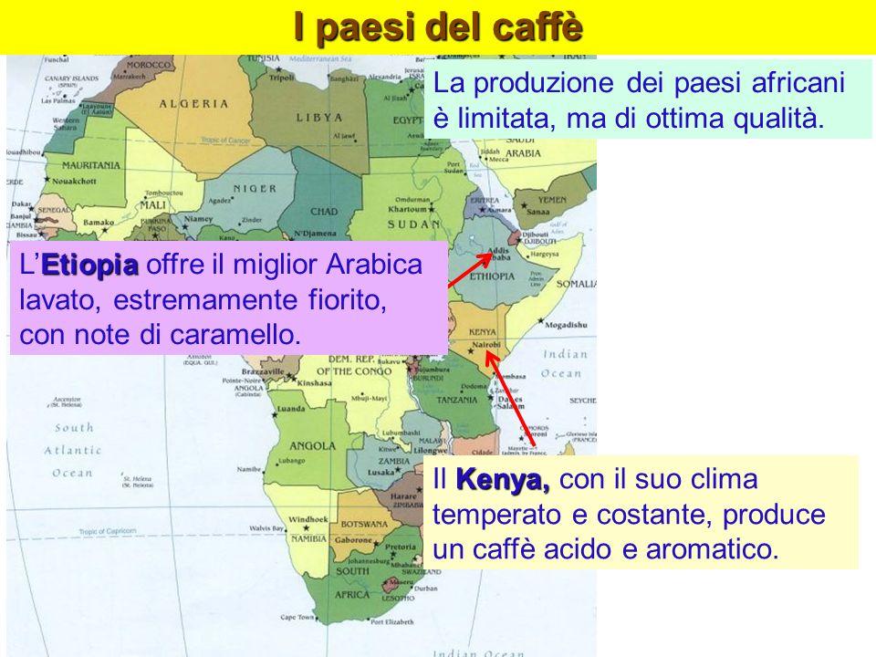 Kenya, Il Kenya, con il suo clima temperato e costante, produce un caffè acido e aromatico. Etiopia LEtiopia offre il miglior Arabica lavato, estremam