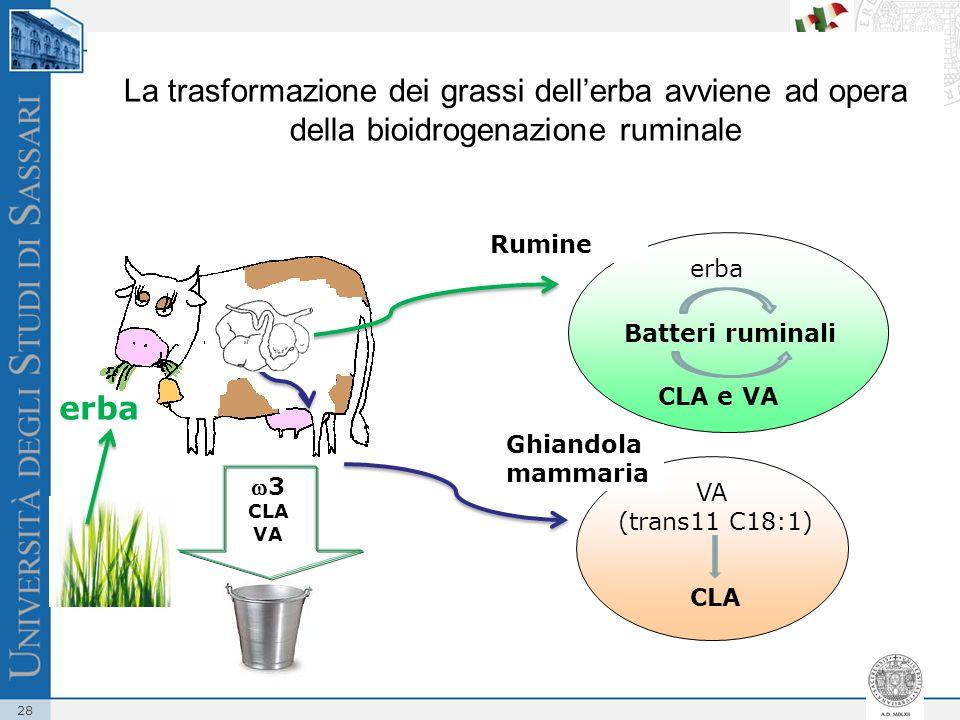 28 La trasformazione dei grassi dellerba avviene ad opera della bioidrogenazione ruminale erba Batteri ruminali erba CLA e VA Ghiandola mammaria VA (t