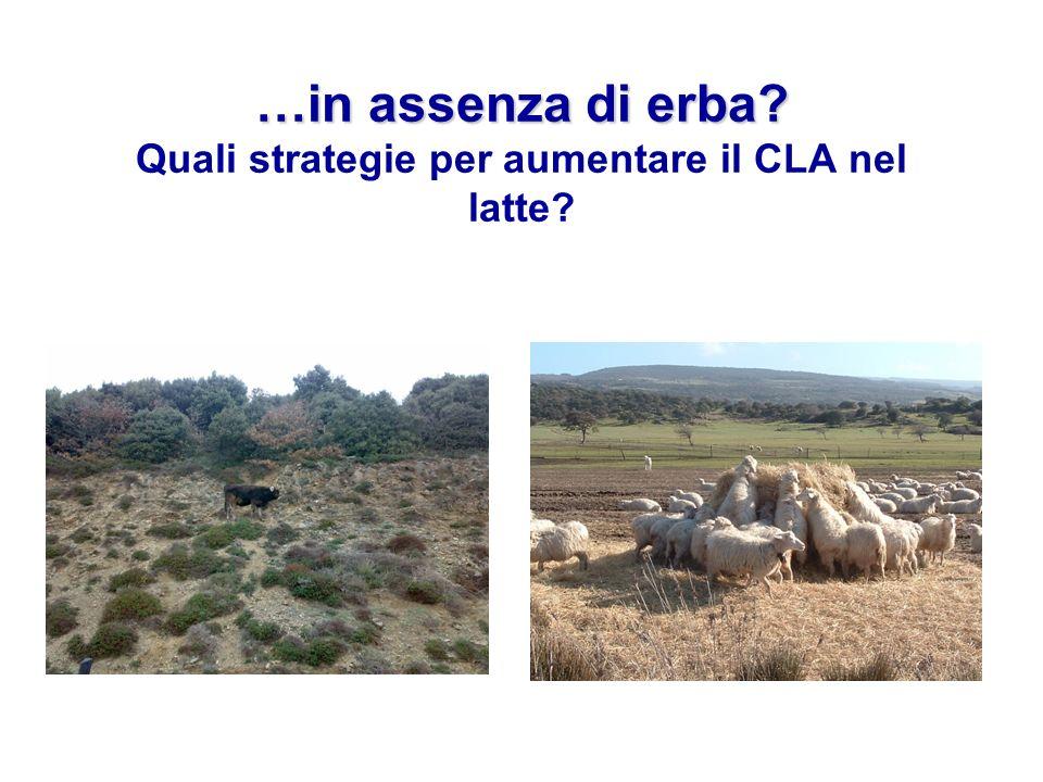 …in assenza di erba? …in assenza di erba? Quali strategie per aumentare il CLA nel latte?