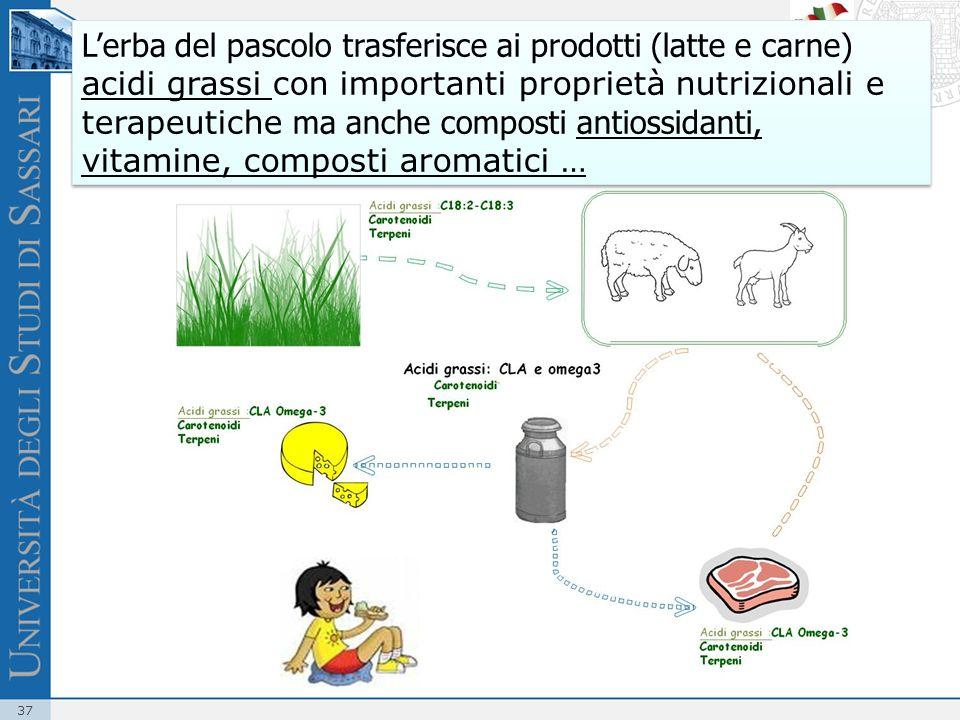37 Lerba del pascolo trasferisce ai prodotti (latte e carne) acidi grassi con importanti proprietà nutrizionali e terapeutiche ma anche composti antio