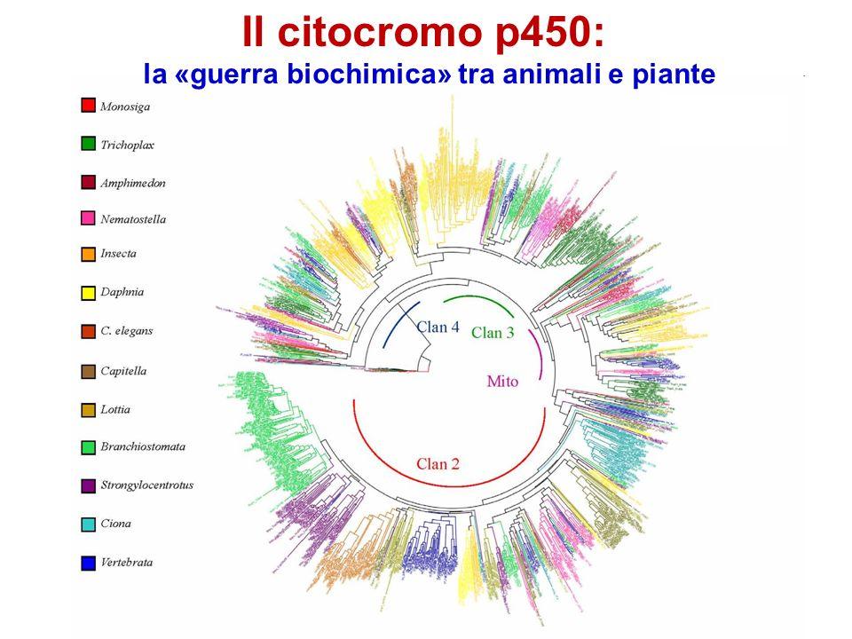 Il citocromo p450: la «guerra biochimica» tra animali e piante