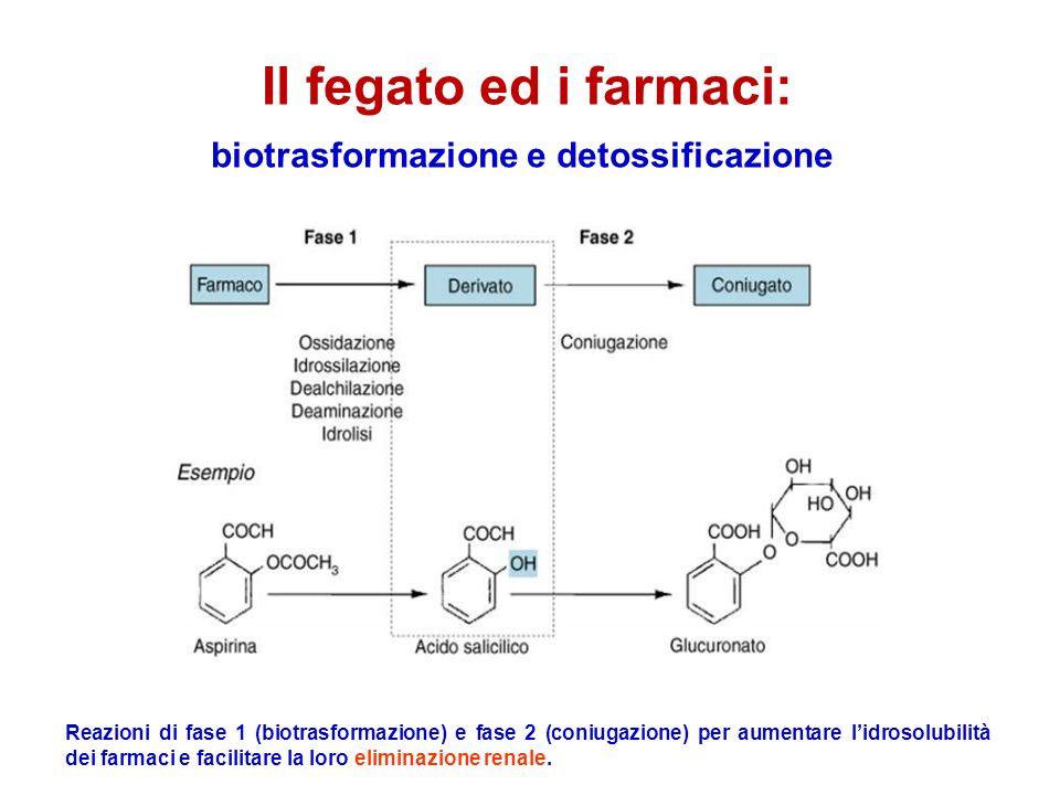 Il fegato ed i farmaci: biotrasformazione e detossificazione Reazioni di fase 1 (biotrasformazione) e fase 2 (coniugazione) per aumentare lidrosolubilità dei farmaci e facilitare la loro eliminazione renale.