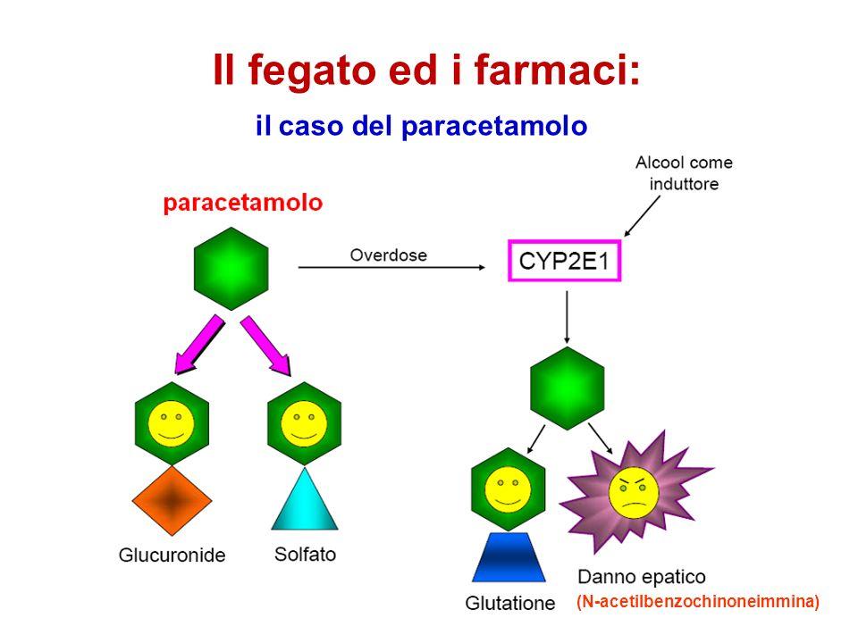 Il fegato ed i farmaci: il caso del paracetamolo (N-acetilbenzochinoneimmina)