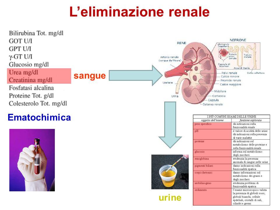 Leliminazione renale sangue urine Ematochimica