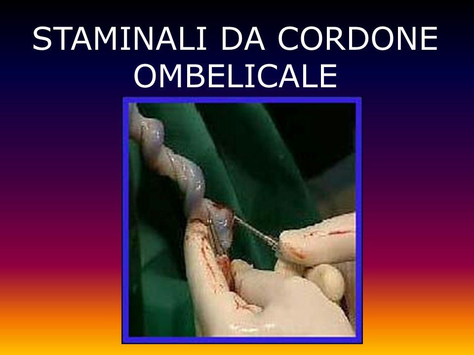 STAMINALI DA CORDONE OMBELICALE