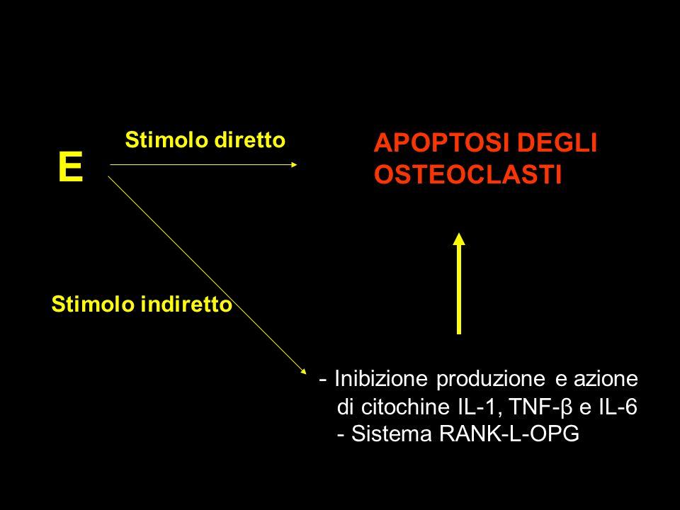 E Stimolo diretto Stimolo indiretto - Inibizione produzione e azione di citochine IL-1, TNF-β e IL-6 - Sistema RANK-L-OPG APOPTOSI DEGLI OSTEOCLASTI