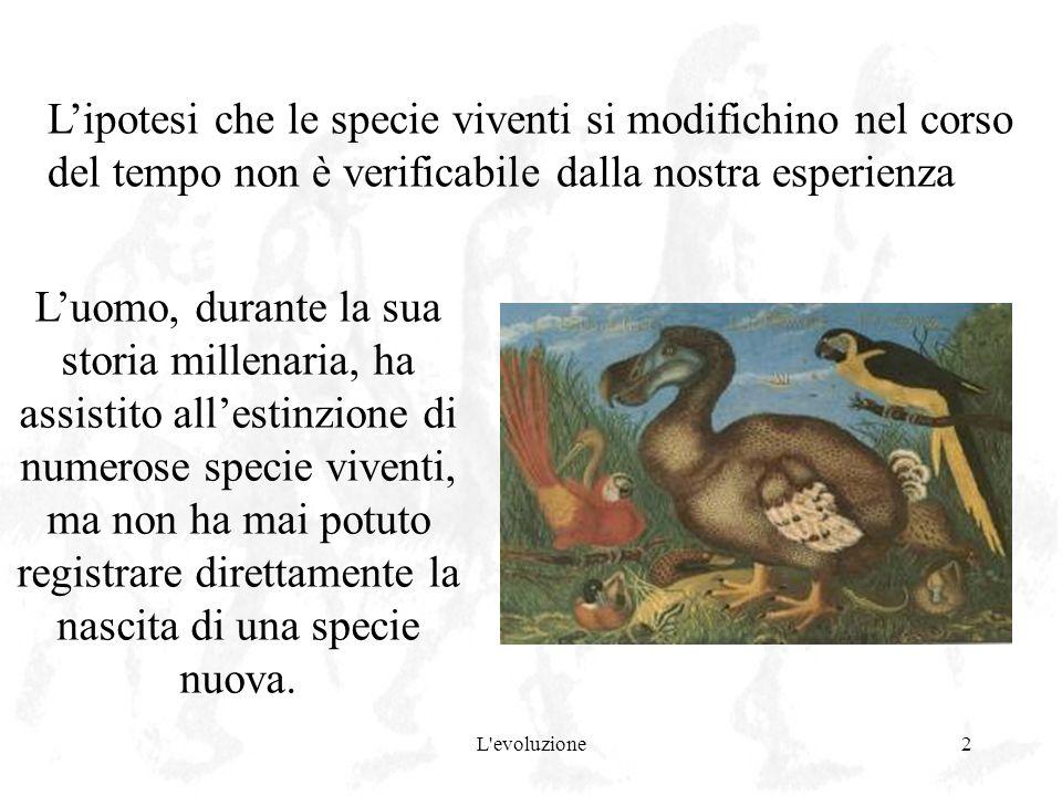 L evoluzione3 A causa di ciò per lungo tempo si è ritenuto che le specie fossero fisse ed immodificabili Levoluzione prima di Darwin Gli antichi greci ritenevano che le specie si originassero dalla terra, le une separatamente dalle altre, e che rimanessero costantemente uguali nel tempo fissismo Aristotele (384 – 322 a.C.) studiò e classificò circa 500 specie di animali, mentre Teofrasto (371 – 287 a.C.), suo discepolo, ne classificò altrettante di vegetali