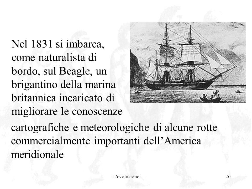 L'evoluzione20 Nel 1831 si imbarca, come naturalista di bordo, sul Beagle, un brigantino della marina britannica incaricato di migliorare le conoscenz