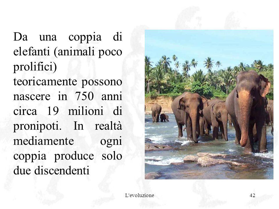 L'evoluzione42 Da una coppia di elefanti (animali poco prolifici) teoricamente possono nascere in 750 anni circa 19 milioni di pronipoti. In realtà me