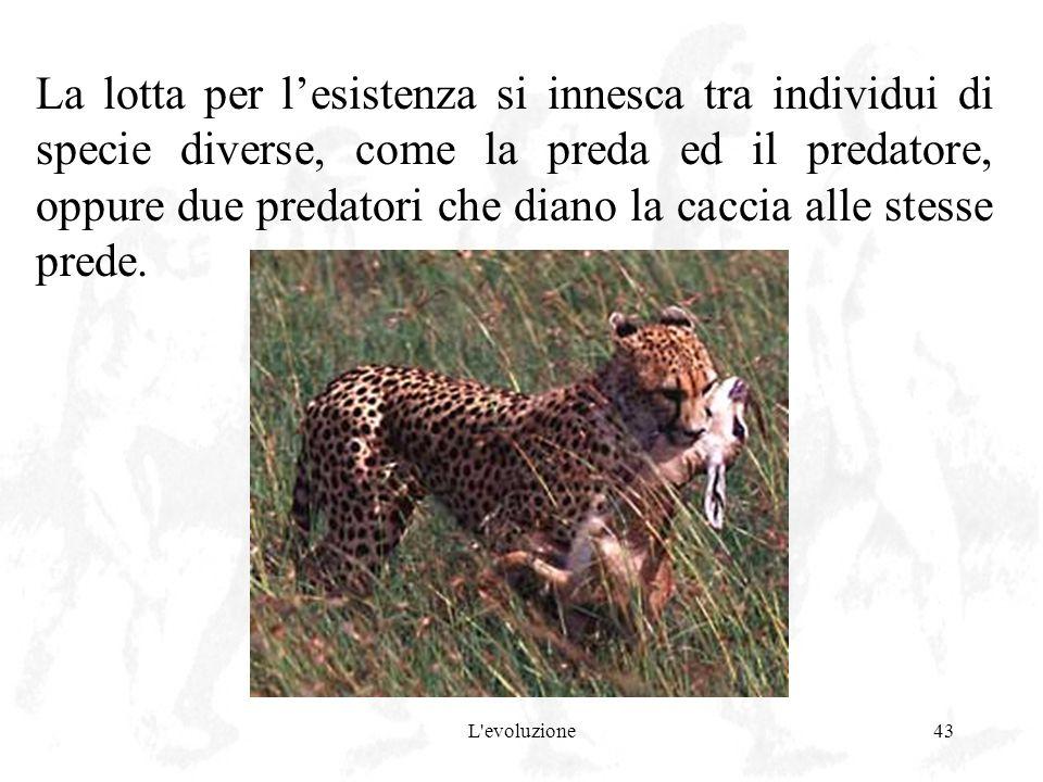 L'evoluzione43 La lotta per lesistenza si innesca tra individui di specie diverse, come la preda ed il predatore, oppure due predatori che diano la ca