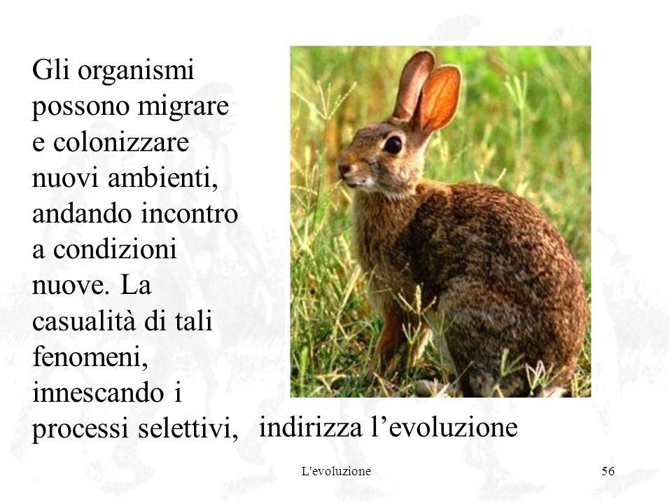 L'evoluzione56 Gli organismi possono migrare e colonizzare nuovi ambienti, andando incontro a condizioni nuove. La casualità di tali fenomeni, innesca