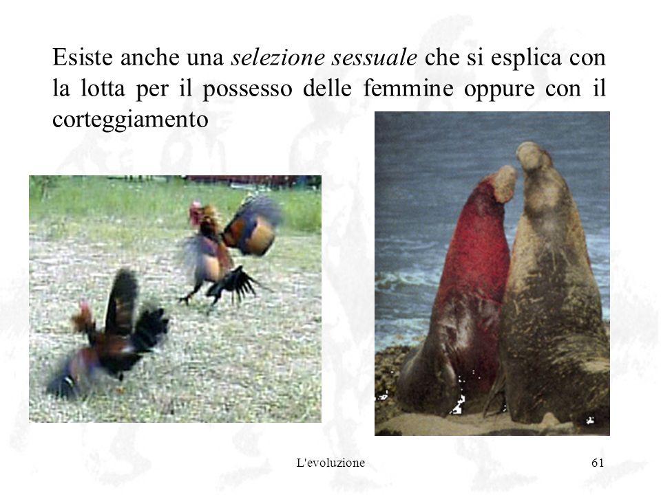 L'evoluzione61 Esiste anche una selezione sessuale che si esplica con la lotta per il possesso delle femmine oppure con il corteggiamento